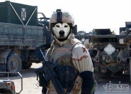 人模狗样,大兵该出发了。