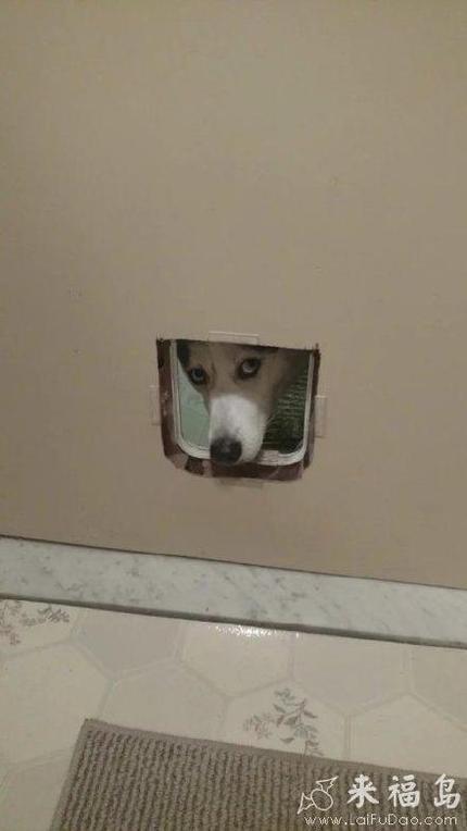 狗狗知道的道道还挺多