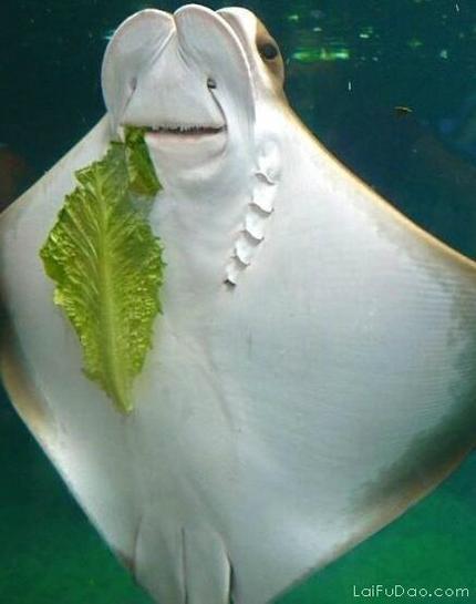 牙缝里有菜叶吗?