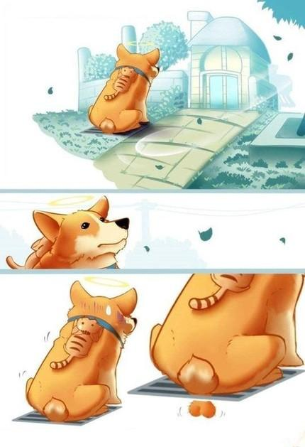 忠诚的狗和令人心碎的结局