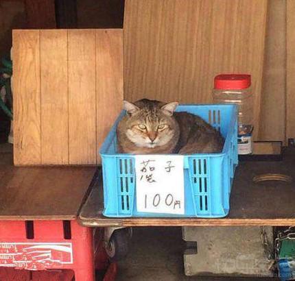 你妹呀!谁家茄子能变身成了猫咪?