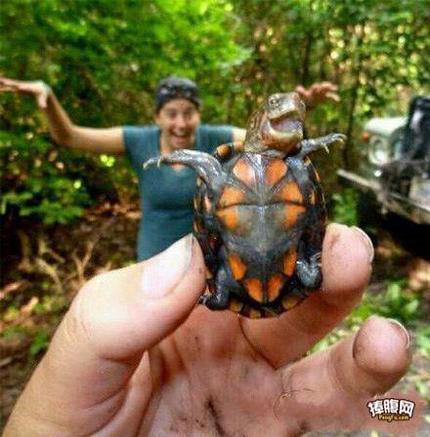 你们是忍者神龟派来的救兵吗?