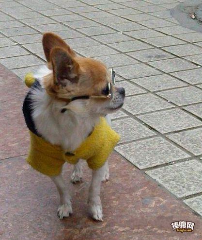 街头偶遇文艺狗一枚