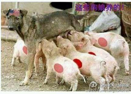 一群猪的图片_