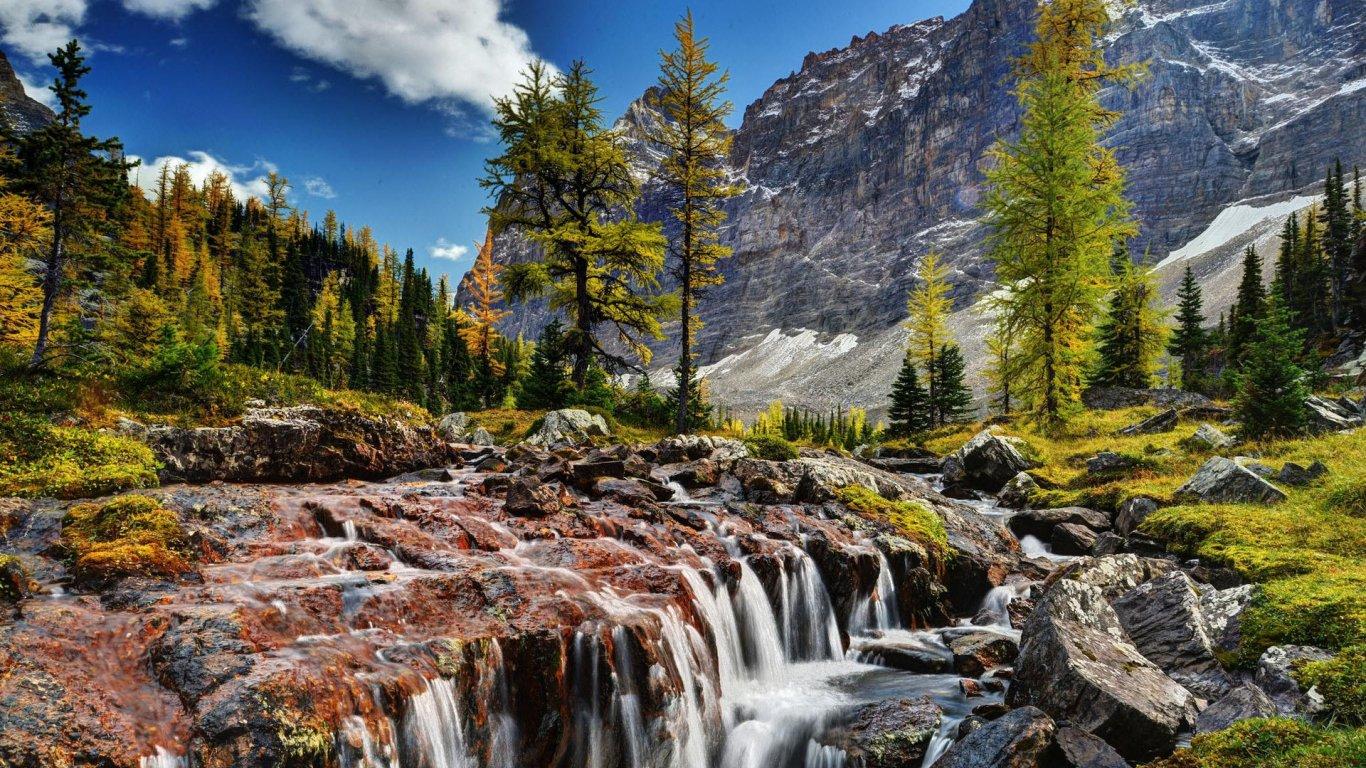 自然风景美图 - 橄榄园主2009 - 橄榄园主 马到成功